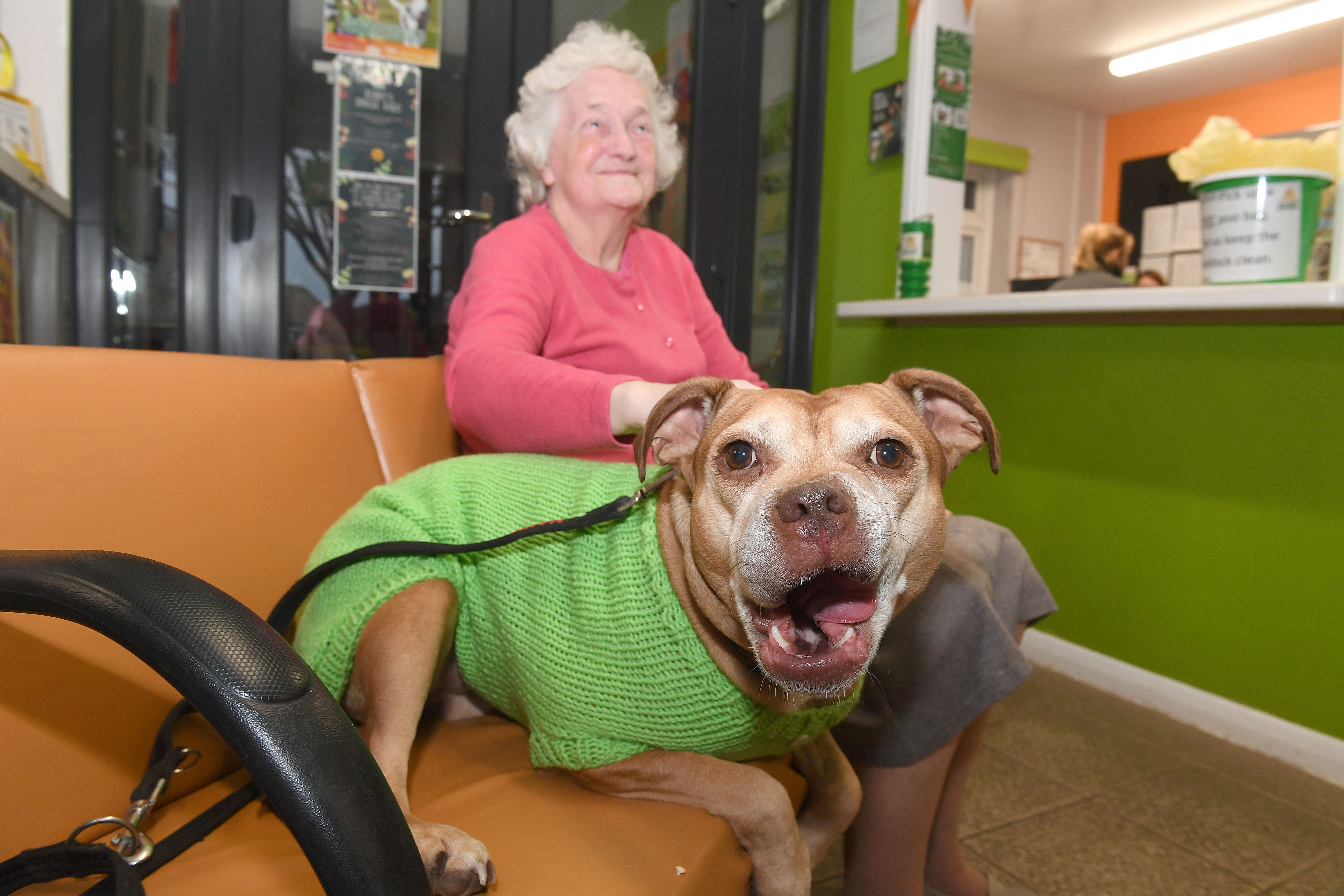 Residents Knit Coats for Dogs