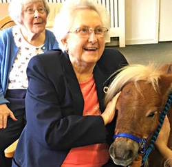 Two miniature Shetland ponies have been spreading their love – and some therapy – after paying a visit to two generations of animal lovers.